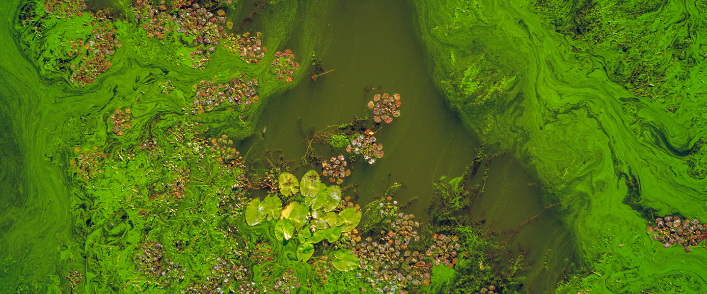 algal-bloom-iStock600090610-1440x600